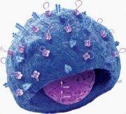Как натравить иммунную систему на раковые клетки